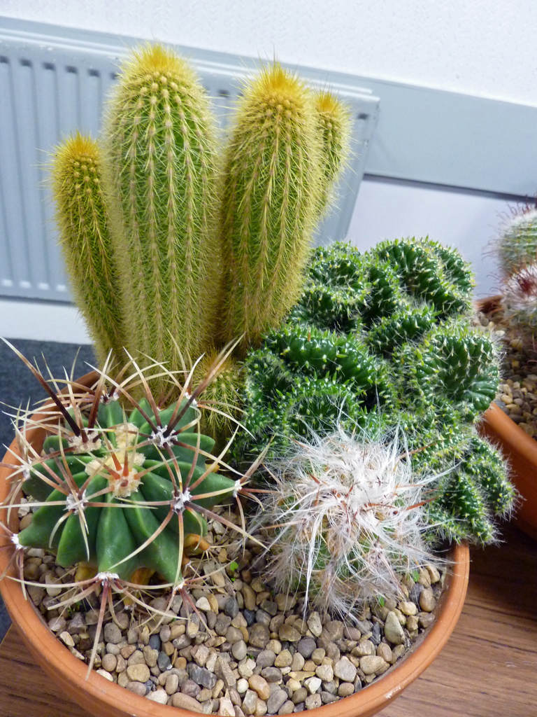 Passionate About Prickly Cactus Rhs Of Perthshire